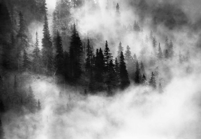 Wall mural photo wallpapers Foggy forest | Homewallmurals Shop